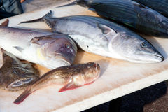 Pescados mediterráneos en el mercado Fotografía de archivo