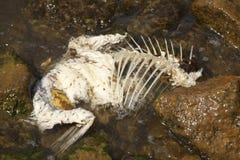 Pescados muertos blancos Imágenes de archivo libres de regalías