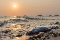 Pescados muertos contra puesta del sol en la costa de la isla de Koh Chang, Thail Imágenes de archivo libres de regalías