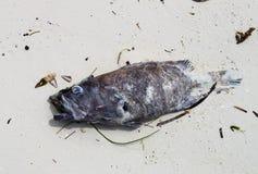 Pescados muertos en la arena Imagen de archivo libre de regalías