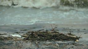 Pescados muertos en la costa, impacto negativo de la contaminación de agua y recursos de la basura almacen de metraje de vídeo