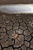 Pescados muertos en pista seca Fotografía de archivo
