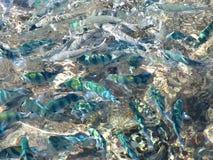 Pescados multicolores en el mar Fotos de archivo