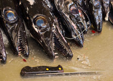Pescados negros de la funda foto de archivo libre de regalías