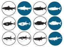 Pescados para el sushi Imagenes de archivo