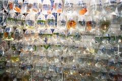 Pescados para la venta en Hong-Kong foto de archivo libre de regalías
