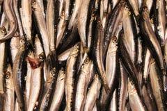 Pescados para la venta en Hong-Kong Imagen de archivo libre de regalías