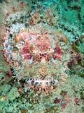 Pescados peligrosos en el filón coralino Imágenes de archivo libres de regalías