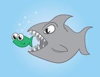 Pescados que comen pescados Imagen de archivo libre de regalías