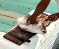 Pescados que cortan Fotos de archivo