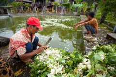 Pescados que introducen Imagen de archivo libre de regalías