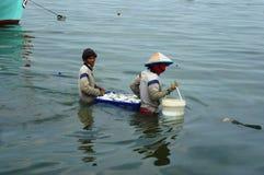 Pescados que llevan Imagenes de archivo