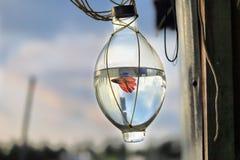 Pescados que luchan en la botella Imagen de archivo libre de regalías