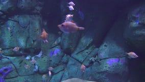 Pescados que nadan debajo del mar almacen de video