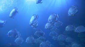 Pescados que nadan en el acuario metrajes