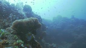 Pescados que nadan en el mar subacuático en fondo del arrecife de coral y burbujas de aire del buceador almacen de video