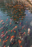 Pescados que nadan lejos fotografía de archivo