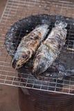 Pescados rayados del snakehead de la parrilla con la sal Imágenes de archivo libres de regalías