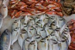 Pescados recién pescados foto de archivo
