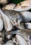 Pescados recién pescados imagenes de archivo