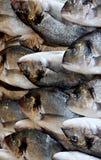Pescados recién pescados para la venta imagenes de archivo