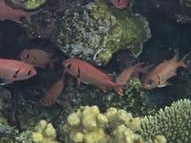 Pescados rojos Fotografía de archivo
