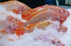 Pescados rojos de la Tilapia o pescados de rubíes con hielo en un mercado imagenes de archivo