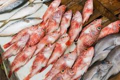 Pescados rojos frescos foto de archivo libre de regalías