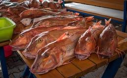 Pescados rojos frescos en el mercado de pescados primer imagenes de archivo