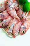 Pescados rojos sin procesar Imagen de archivo libre de regalías