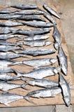 Pescados salados secados Imagen de archivo libre de regalías