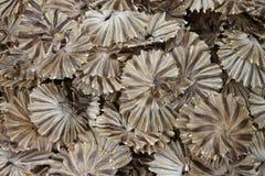Pescados salados secados Foto de archivo