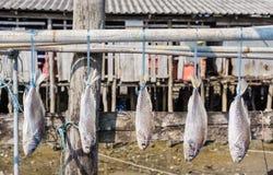 Pescados salados secados Fotos de archivo libres de regalías