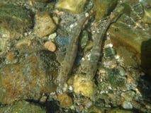 Pescados salvajes Imagen de archivo libre de regalías