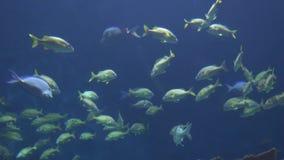 Pescados salvajes en agua almacen de metraje de vídeo