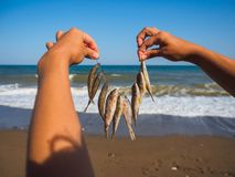 Pescados secados imagen de archivo