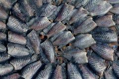 Pescados secados Foto de archivo