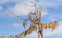 Pescados secados Fotografía de archivo