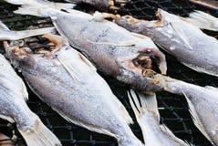 Pescados secados Fotos de archivo