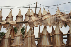 Pescados secados Imágenes de archivo libres de regalías
