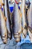 Pescados secados Imagenes de archivo