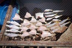 Pescados secados Fotos de archivo libres de regalías