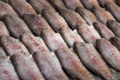 Pescados secados al sol/docena de los pescados que se secan en el sol foto de archivo libre de regalías
