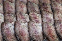 Pescados secados al sol/docena de los pescados que se secan en el sol fotografía de archivo libre de regalías