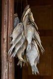 Pescados secados colgantes Imagen de archivo libre de regalías