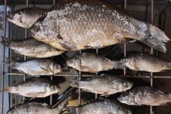 Pescados secados crucian Foto de archivo libre de regalías