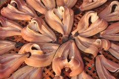 Pescados secados del agua Fotos de archivo libres de regalías
