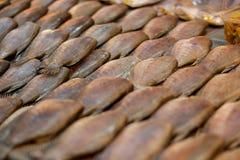 Pescados secados del músculo pectoral de Trichogaster, pescados secados al sol fotografía de archivo