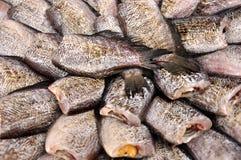 Pescados secados en mercado local Fotos de archivo libres de regalías