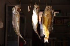 Pescados secados pescados salados Fotografía de archivo libre de regalías